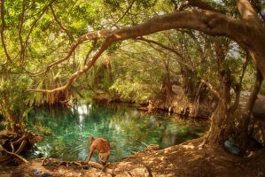 Kikuletwa Hot Springs, Tanzania by SteveCampbell