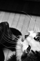 Pincer Whiskers by msteenphotographer