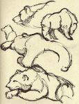 Life Drawing - Grizzly Bear by straya