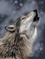 .::cold howl::. by flame1111 by ArtOfThePawAndFang