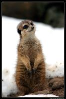 Curiosity by Arwen91