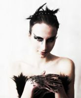 black swan by Fraulein-Maria