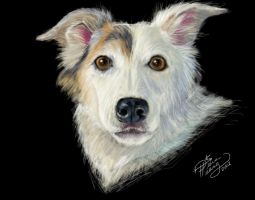 Jennys Dog by Diana-Huang