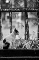 cat...please look at me by sugataYangPhotograph