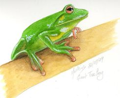 Giant Tree Frog by DragonsDust