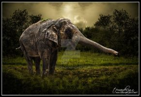 Old Elephant by teMan