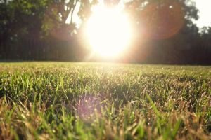 Grassy Sunshine by Haus-of-Keith