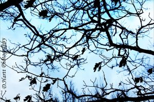 Tree Branches by photographygirl13
