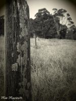 Old Fence Line by Uchiha-Kioko