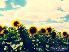 On the land of sunflowers by szdora91