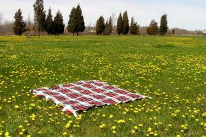 Blanket in Field Background 5 by loopyker-stock