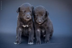 Puppies sleeping by Kelshray-photo