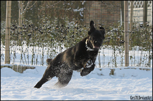 Milo in the snow 1 by Gex78