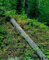 Fallen log,img520 by harrietsfriend