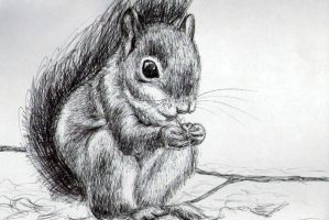 Squirrel by ambermariaalice