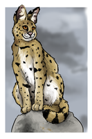 Serval by painted-flamingo