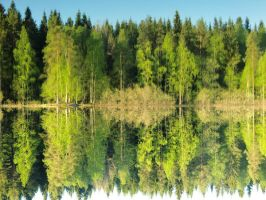 A mirrored forest by ainoani