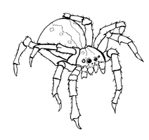 Spider Lineart by Dragriyu