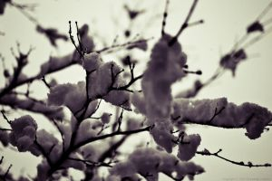 White cold coat... by Yohao88DG