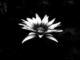 Lotus in the Black Lagoon BW by BloodOfJeanClaude
