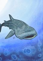 Whale Shark by jeriweaver