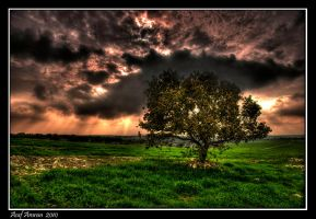 The Tree of Knowledge by amassaf