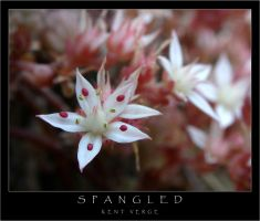 Spangled by wulfster