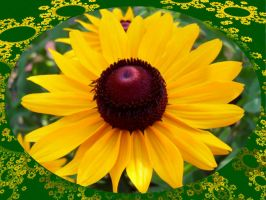 yellow cone flower by damndansdawg