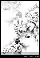 White Tailed Deer by Qiu-Ling