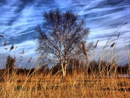 Behind Reeds by Stevie73