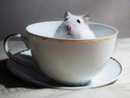 Hamster in the cup by Xenusiowa