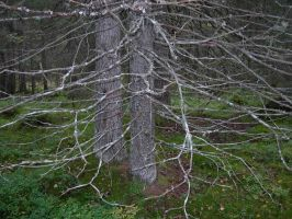 Trees and forest floor by Creativeness