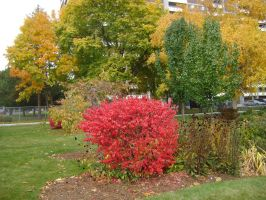 Canadian Fall Colours 4 by Aswang301