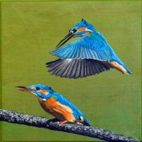 Kingfisher Painting by thrumyeye