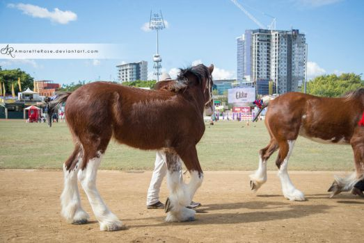 RQS Clydesdale #111 by AmoretteRose