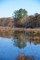 Late fall reflections by Tailgun2009