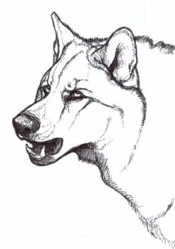 Wolfy Sketchy by nikkiburr