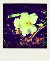 fallen flower. by x--photographygirl