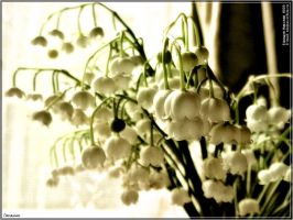 Lily of the valley 2003 by firework