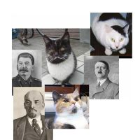 Cat look alikes by Yumkie