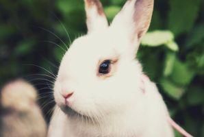 Edith The Bunny. by jamiedenton