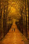 On Golden Path by nomad666