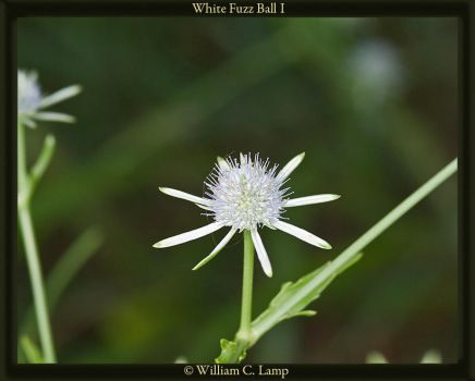 White Fuzz Ball 1 by Vermundr
