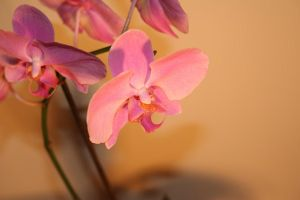 Retro Orchids by onelook