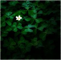 HAPPY SAINT PATRICK'S DAY by THOM-B-FOTO