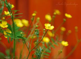 flowers.... by TheRedGirl