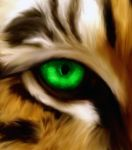 Tigress eye by Venku-Zephyr