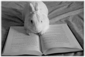 Reading Bunny by Possumsgurl