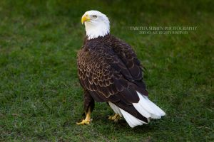 Standing Proud by TabithaS-Photography