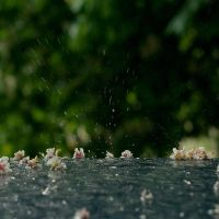 Bokeh.Drops.Rain by Yagodka